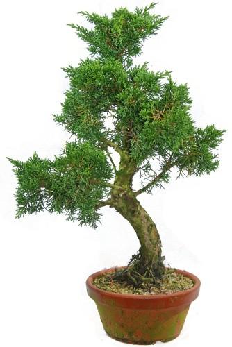 Бисероплетение деревья бонсай