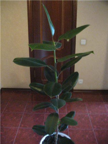 Растения вредные комнатные растения