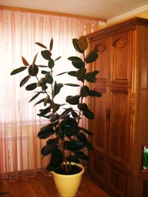 Ljvfiybt декоративные деревья в горшках