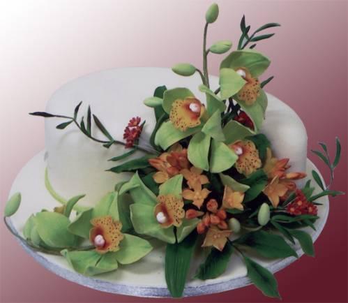 В горшках продажа орхидей в горшках
