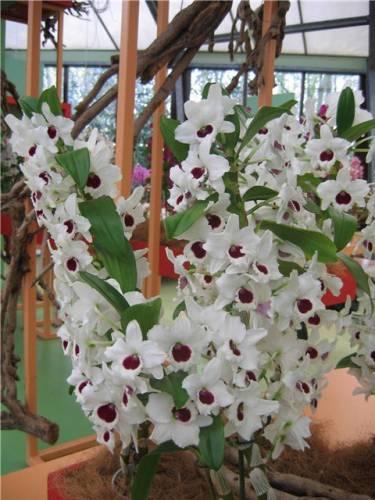 По описанию искусственные цветы плющ