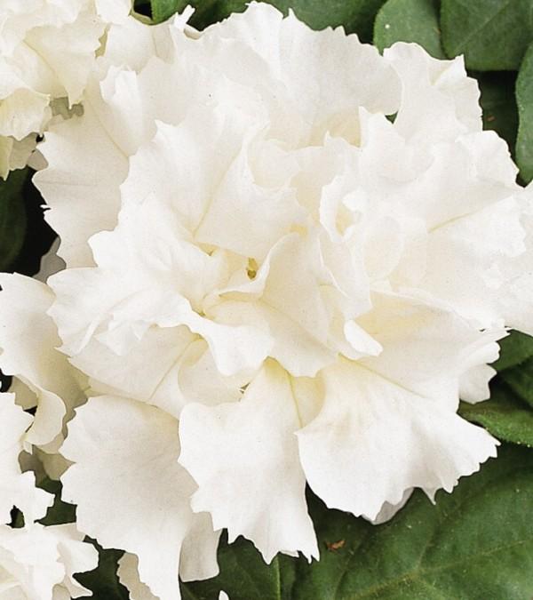 Названия домашних цветов с картинками
