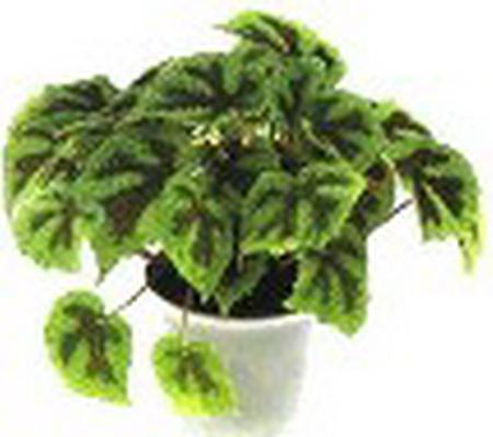 Домашнее растение похожее на крапиву