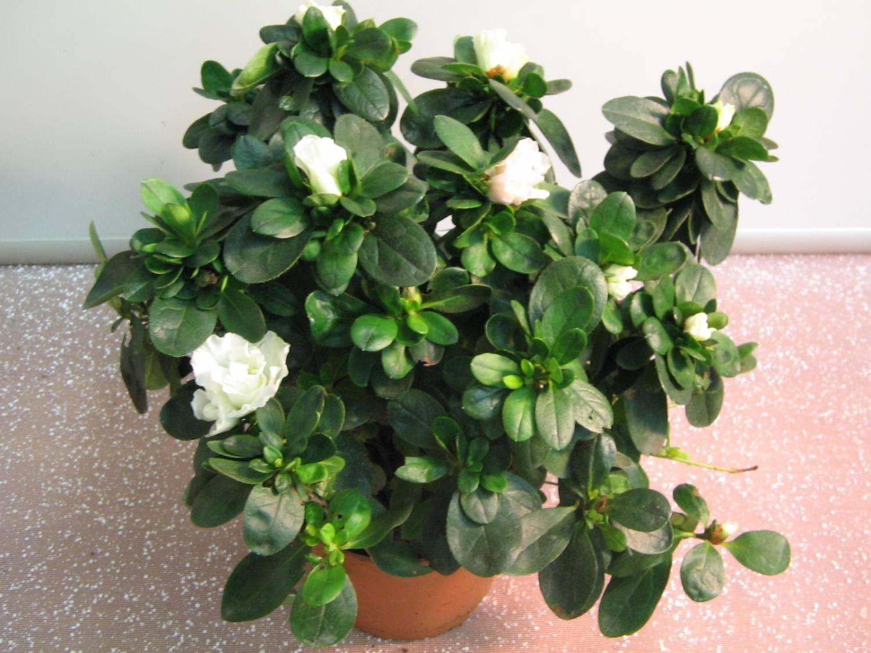 Комнатные цветы показать на фото