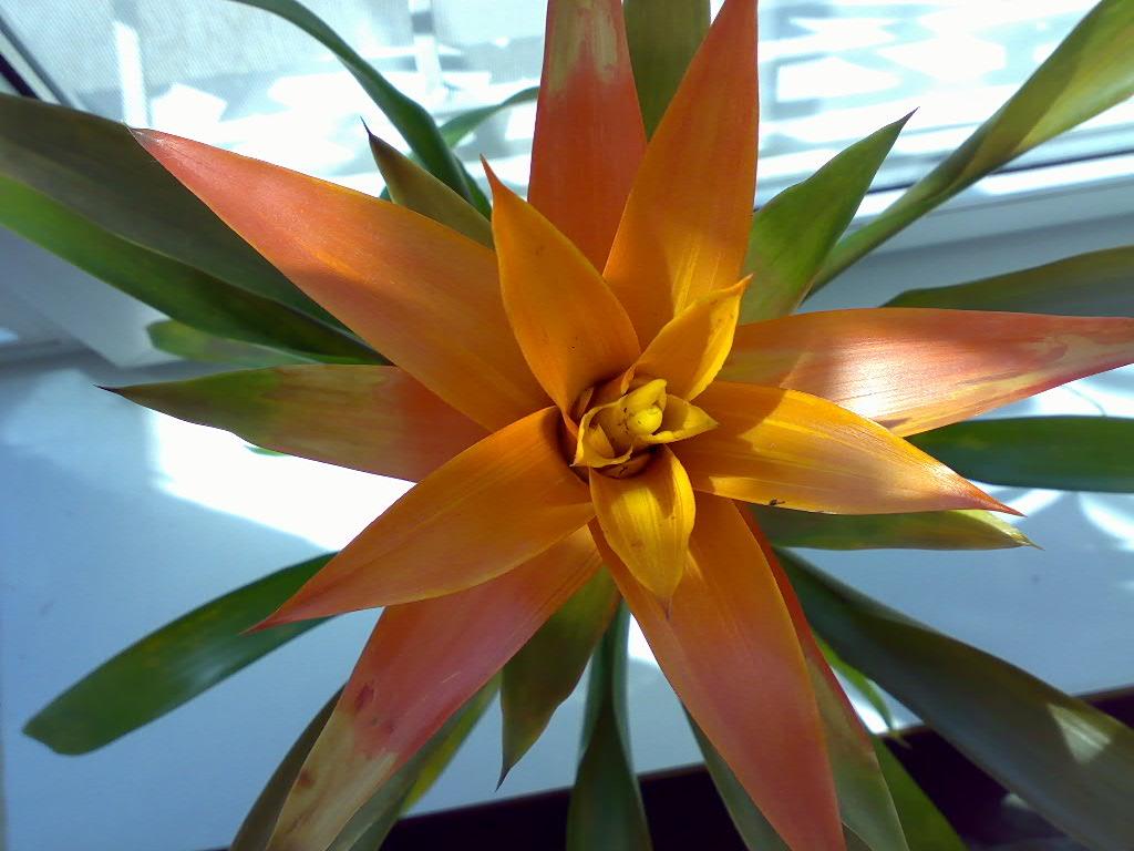 цветок камелия фото уход содержание отзывы
